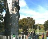 climbing_in_auckland_parks_1.jpg